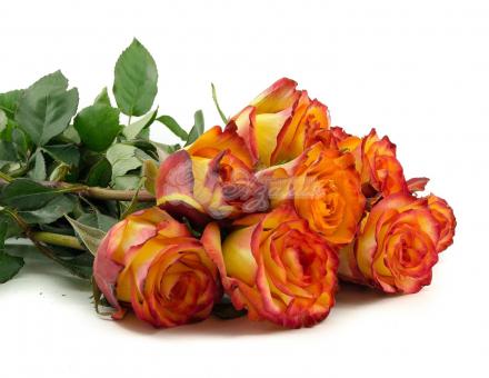 """Высокая желтая роза сорта """"Хай-Мэйджик"""""""